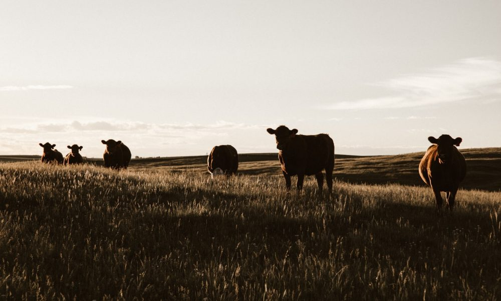 4 Benefits Of Starting An Agriculture Business